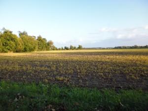 moderne_Landwirtschaft