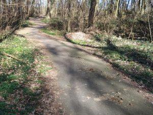 Radweg mit Zweigen, Nadeln und Pferdekot